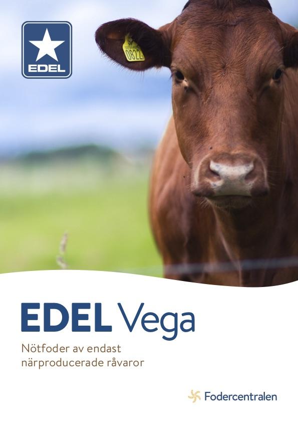 Edel Vega